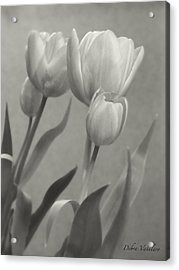 The Mirror Tulips Acrylic Print by Debra     Vatalaro