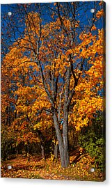The Moment Of Glory Acrylic Print by Jenny Rainbow