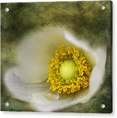 The One Tear That Held  Acrylic Print by JC Photography and Art
