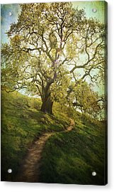 The Path To Brighter Days Acrylic Print by Laurie Search