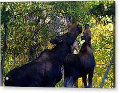 The Picnic In The Park Acrylic Print by Jim Garrison