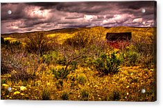 The Red Shed At Red Rock Canyon Acrylic Print by David Patterson