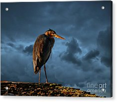 The Rooftop Watcher Acrylic Print by Gail Bridger
