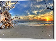 The Root Of Sunshine Acrylic Print by Sean Allen