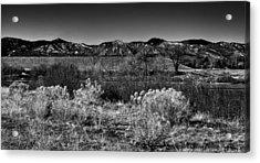 The South Platte Park Landscape II Acrylic Print by David Patterson