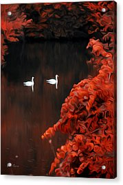 The Swan Pair Acrylic Print by Bill Cannon