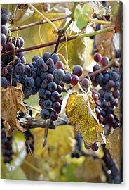 The Vineyard Acrylic Print by Linda Mishler
