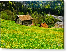 The Yellow Around Acrylic Print by Syed Aqueel