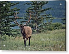This Is Alberta No.19 - Taking A Stroll Acrylic Print by Paul W Sharpe Aka Wizard of Wonders