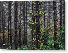 This Is British Columbia No.54f - Misty Mystical Moss Forest IIi Acrylic Print by Paul W Sharpe Aka Wizard of Wonders