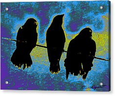 Three Crows Acrylic Print by YoMamaBird Rhonda