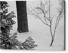 Three Trees In Snow Acrylic Print by Simone Hester