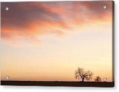 Three Trees Sunrise Sky Landscape Acrylic Print by James BO  Insogna