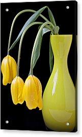 Three Yellow Tulips Acrylic Print by Garry Gay