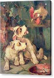 Three's A Crowd Acrylic Print by Philip Eustace Stretton