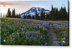 Through The Flowers Acrylic Print by Mike Reid