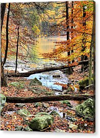 Through The Trees Acrylic Print by JC Findley