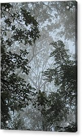 Through The Trees Acrylic Print by