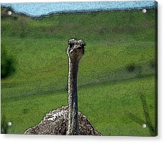 Ticket Please Acrylic Print by Teri Schuster