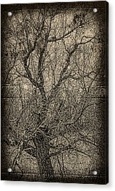 Tickle Of Branches  Acrylic Print by JC Photography and Art