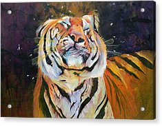 Tiger - Shaking Head  Acrylic Print by Odile Kidd