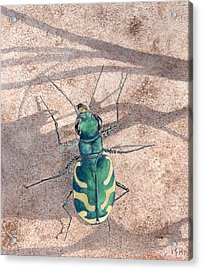 Tiger Beetle Acrylic Print by Inger Hutton