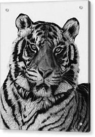 Tiger Acrylic Print by Jyvonne Inman