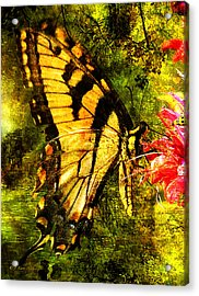 Tiger Swallowtail Butterfly Happily Feeds Acrylic Print by J Larry Walker