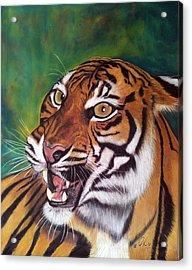 Tiger Acrylic Print by Ursula  Thuleweit Laranjeiro