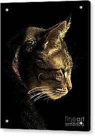 Tiger Within Acrylic Print by Dale   Ford