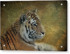 Tigerlily Acrylic Print by Claudia Moeckel