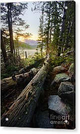 Timber Acrylic Print by Tyler Porter
