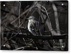 To Kill A Mockingbird Acrylic Print by Lois Bryan