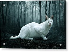 Tonga Acrylic Print by Big Cat Rescue