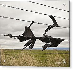 Torn Bags On A Barbed Wire Fence Acrylic Print by Paul Edmondson