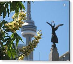 Toronto Spring Acrylic Print by Alfred Ng