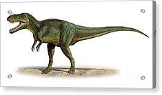 Torvosaurus Tanneri, A Prehistoric Era Acrylic Print by Sergey Krasovskiy