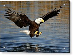 Touch Down Acrylic Print by Paulette Thomas