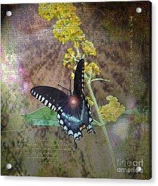 Transformation Acrylic Print by Patricia Griffin Brett