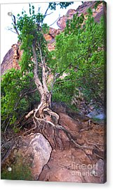 Tree Along The Trail Acrylic Print by Bob and Nancy Kendrick