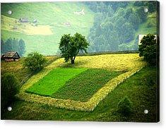 Tree And Field Acrylic Print by Emanuel Tanjala