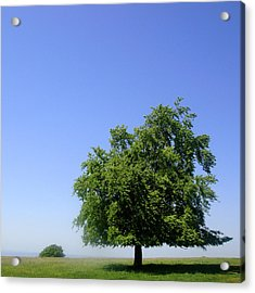 Tree And Field Acrylic Print by Roberto Alamino