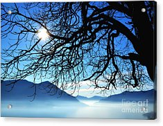 Tree Branches And Sun Acrylic Print by Mats Silvan