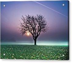 Tree In Field Acrylic Print by Ulrich Mueller