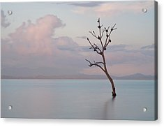 Tree In Water Acrylic Print by Flash Parker