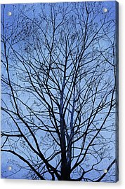 Tree In Winter Acrylic Print by Andrew King