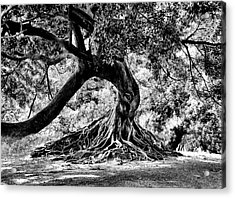 Tree Of Life - Bw Acrylic Print by Kenneth Mucke