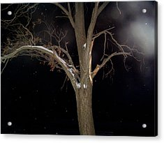 Tree On A Dark Snowy Night Acrylic Print by Victoria Sheldon