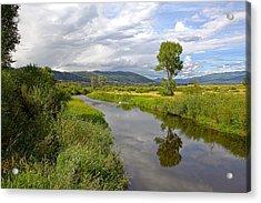 Tree Reflection Acrylic Print by James Steele