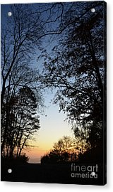 Tree Silhouette At Sunset 1 Acrylic Print by Bruno Santoro